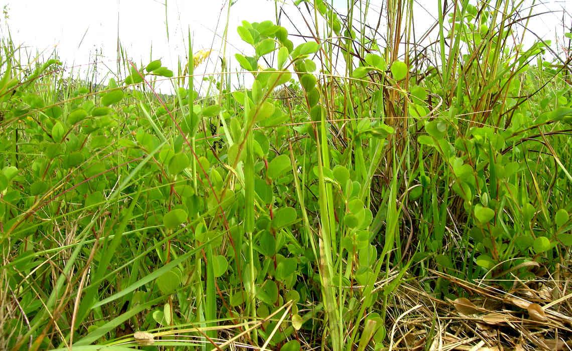 Weeds [CCBY HarryRose]