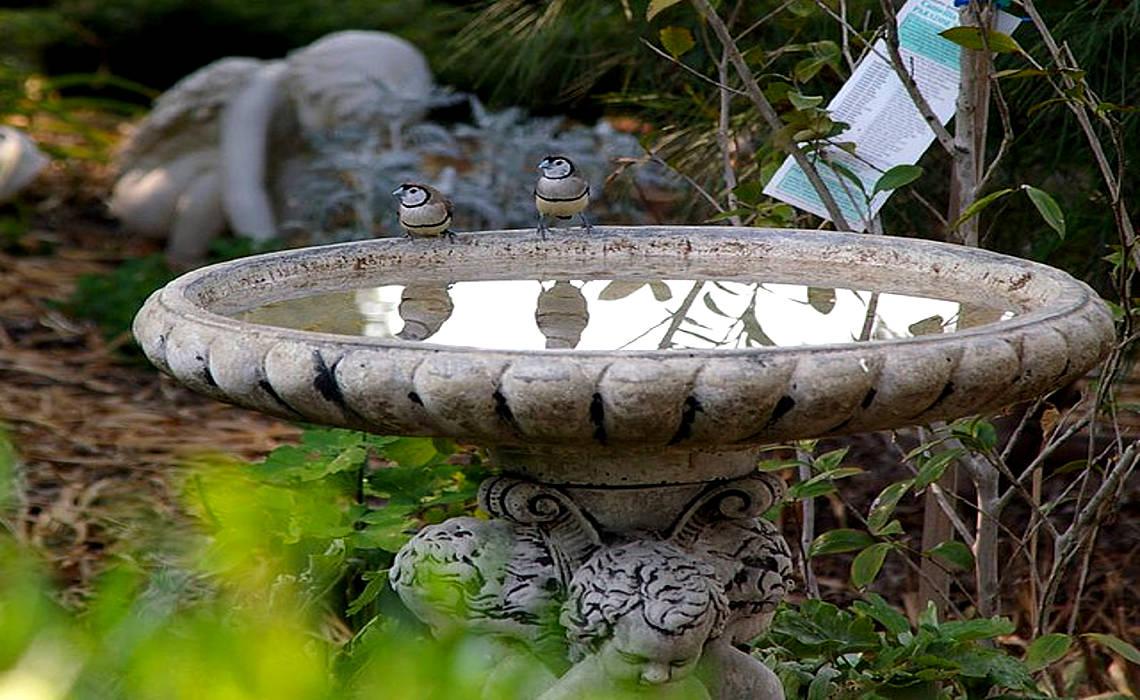 BirdBath [CCBY-SA Percita]