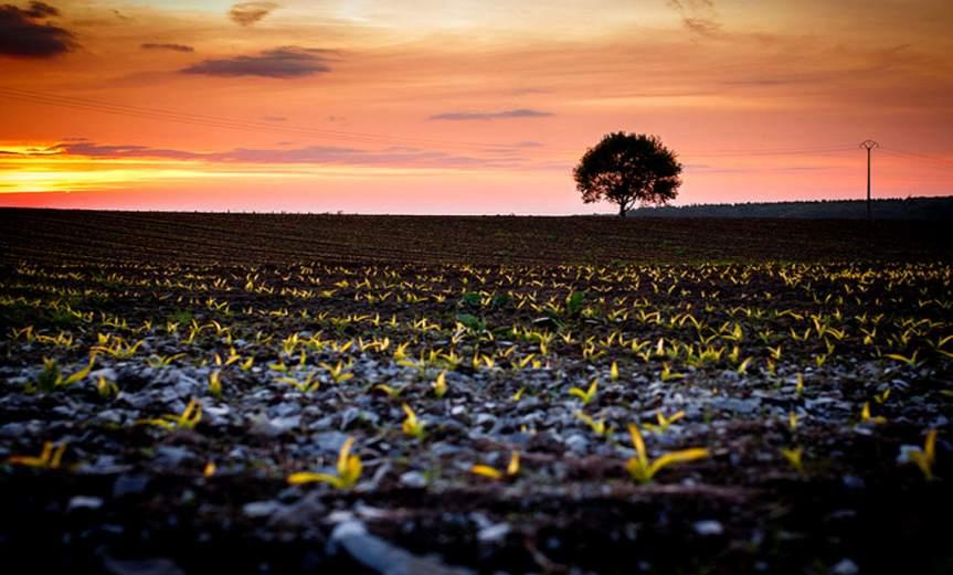 Crops [CCBY-SA MarioGoebbels]