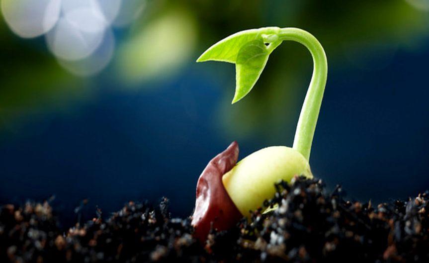 Seeds [CCBY USDepartmentofAgriculture]