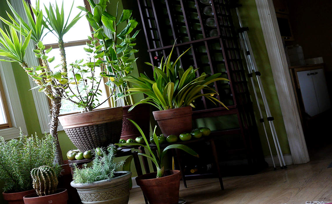 Houseplants [CCBY-SA FDRichards]