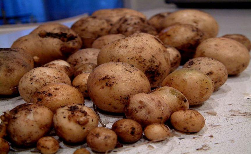 Potatoes [CCBY-SA Alpha]