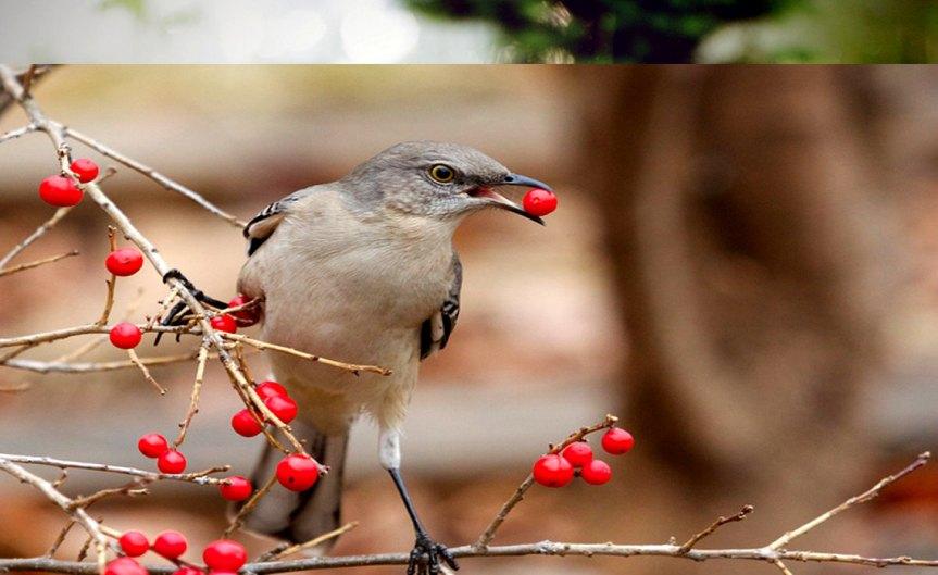 BirdFood [CCBY MattMacGillivray]
