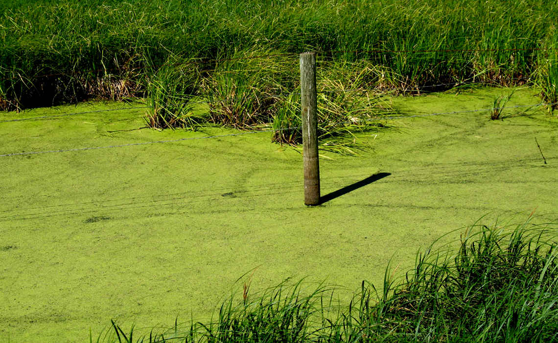 Prevent Algae In Your Pond Blog