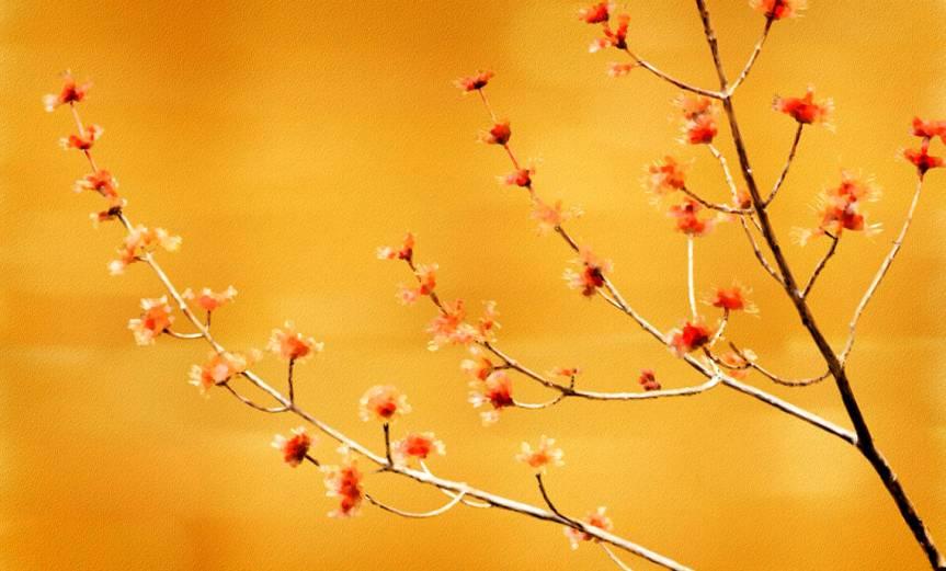 Branch [CCBY RandenPederson]