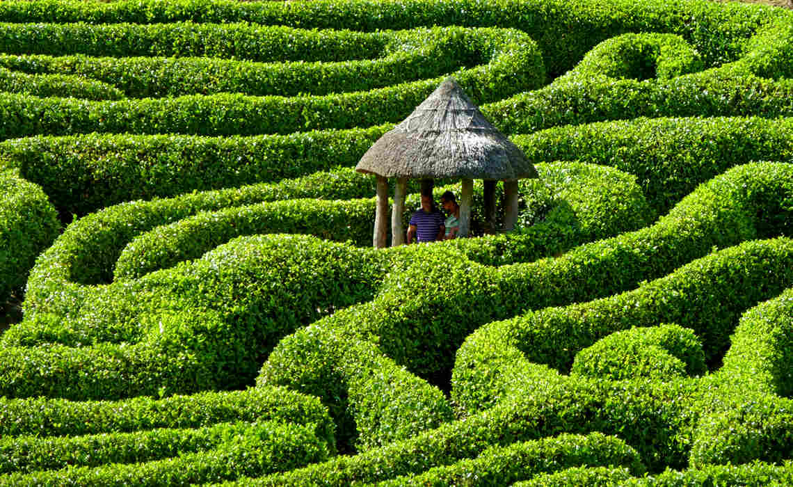 Hedges [CCBY TimGreen]