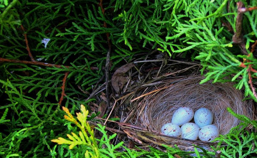 Nest [CCBY JarosławPocztarski]