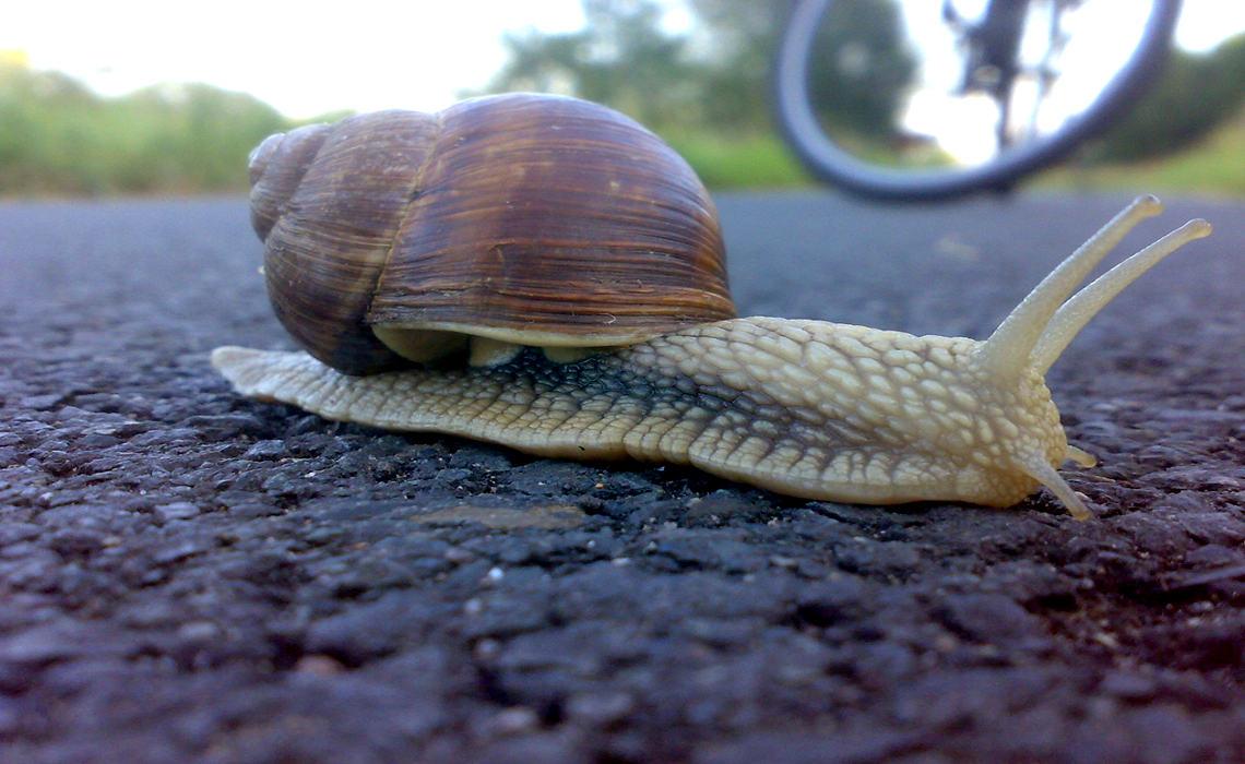 Snail [CCBY MohamedYahya]
