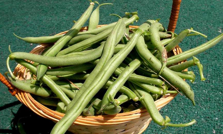 Beans [CCBY-SA ChrisWinters]