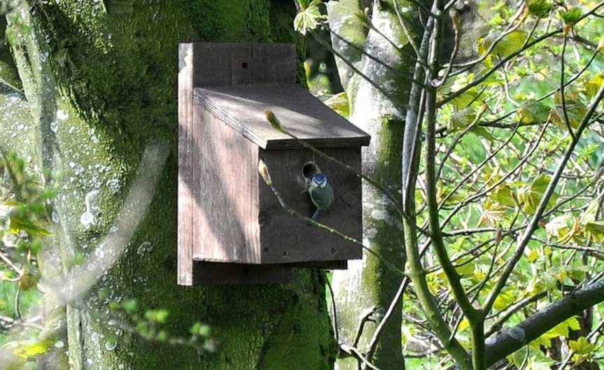 NestingBox [CCBY morebyless]