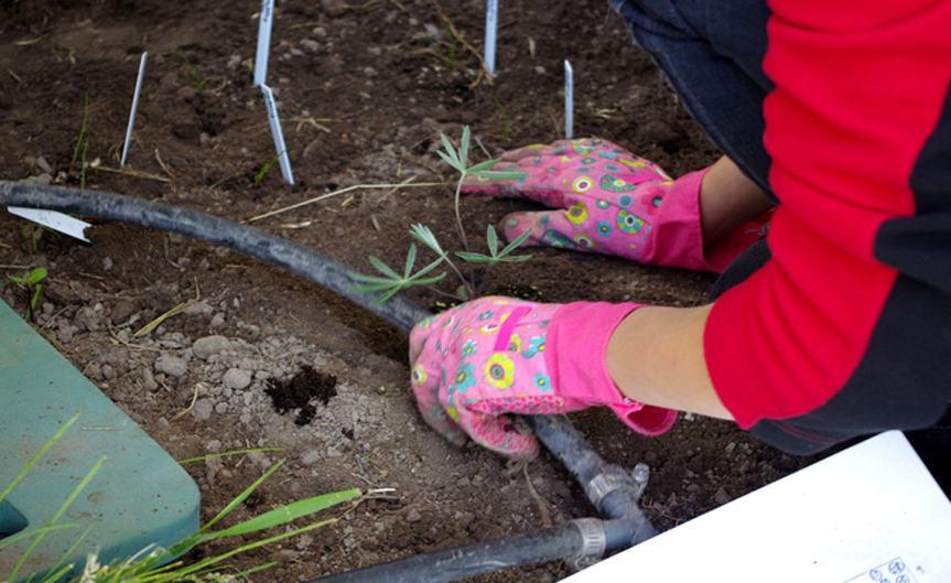 Planting [CCBY ForestServiceNorthernRegion]