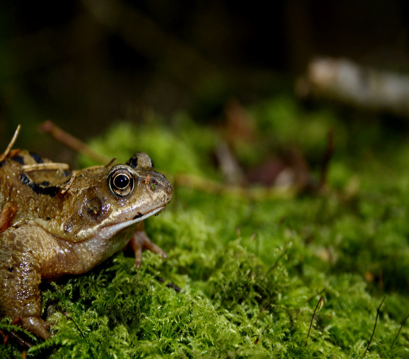 Frog [CCBY ErikPaterson]