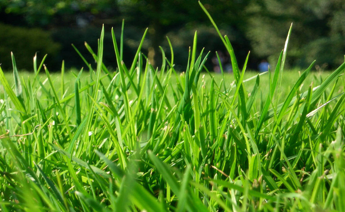 Grass [CCBY-SA MariusKallhardt]