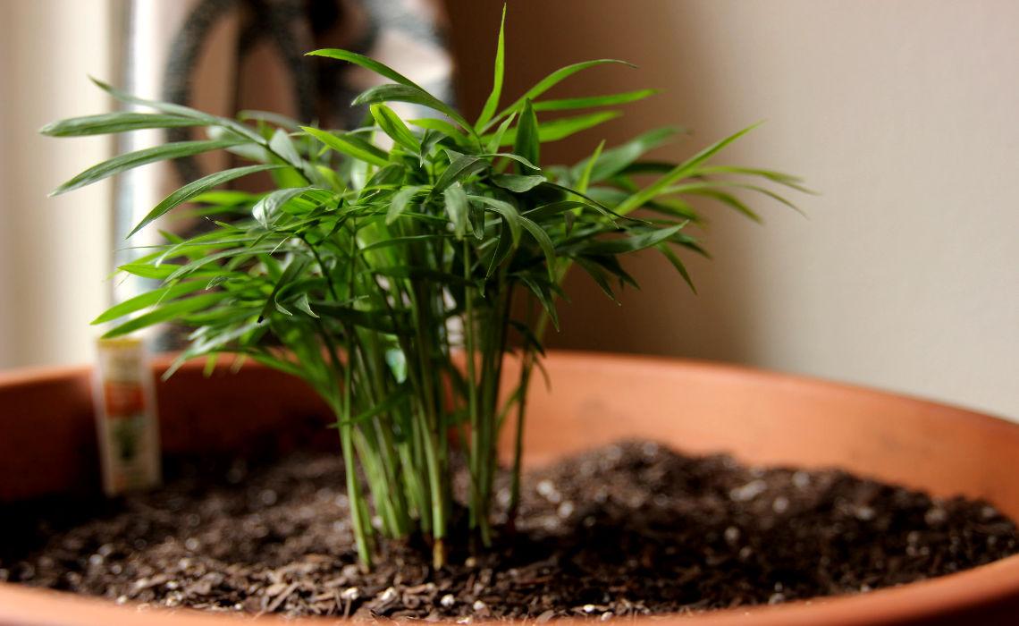 Houseplant [CCBY lukestehr]
