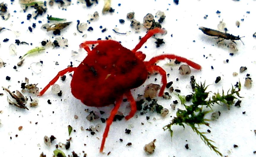 Spidermite [CCBY MickTalbot]