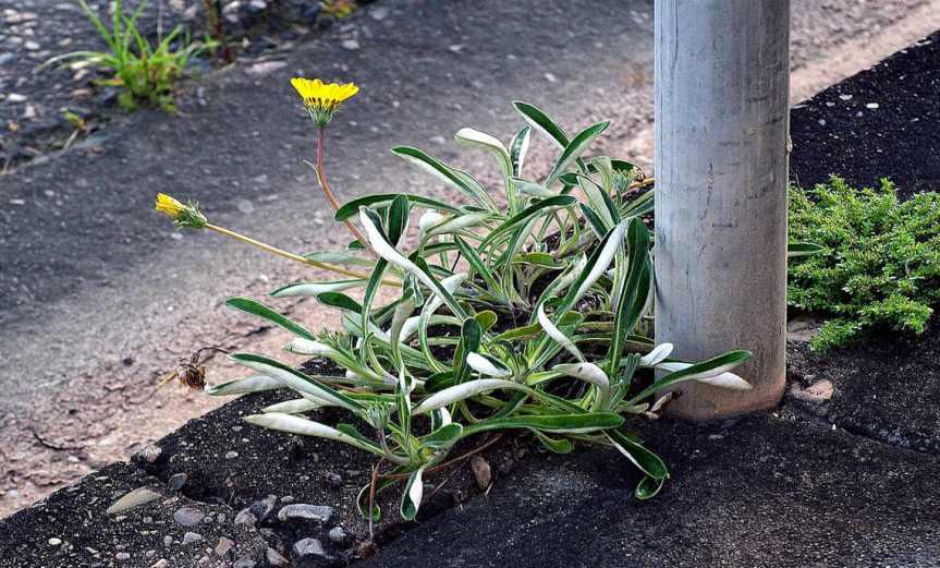 Weeds [CCBY-SA Sam]