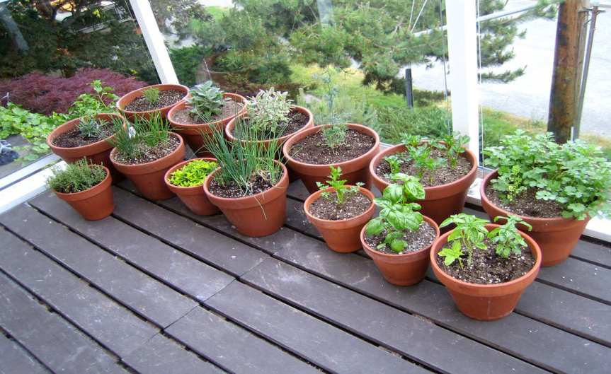 Herbs [CCBY Misha]