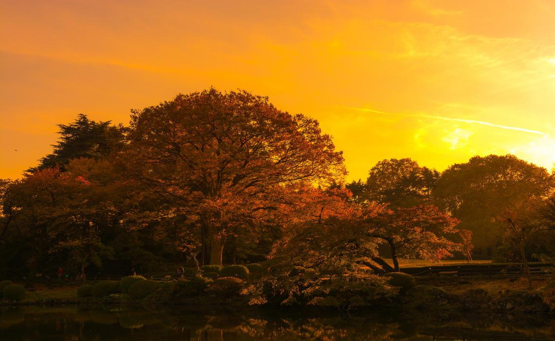Autumn [CCBY YoshikazuTAKADA]
