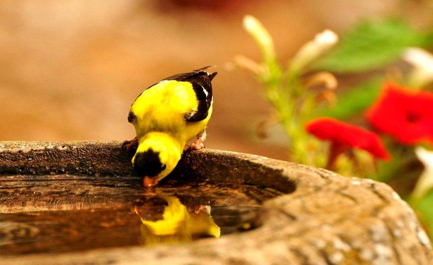 Birdbath [CCBY jeffreyw]