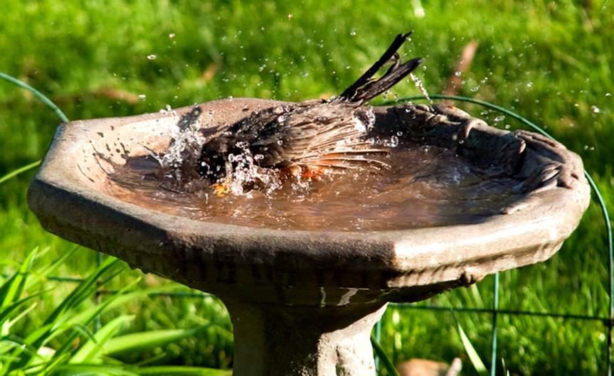 Birdbath [CCBY StevenDepolo]