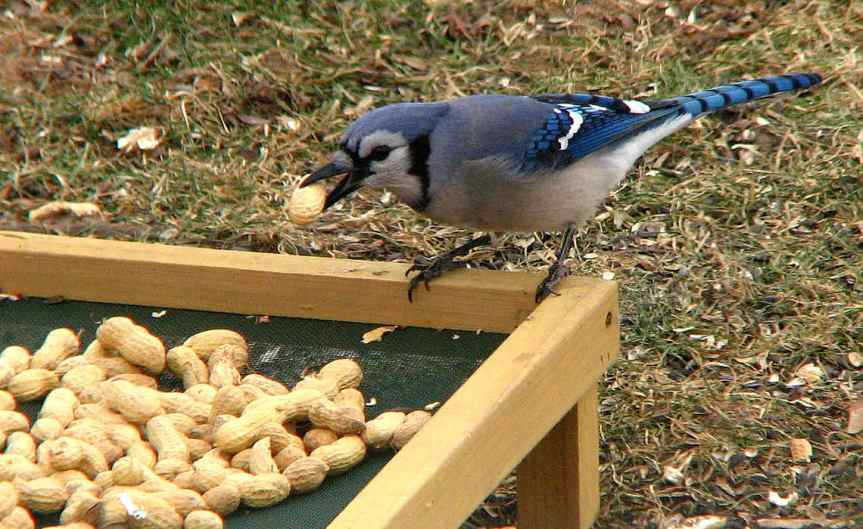 Birdfood [CCBY Fishhawk]