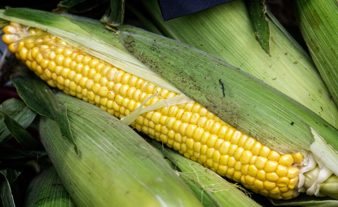 Corn [CCBY GarryKnight]