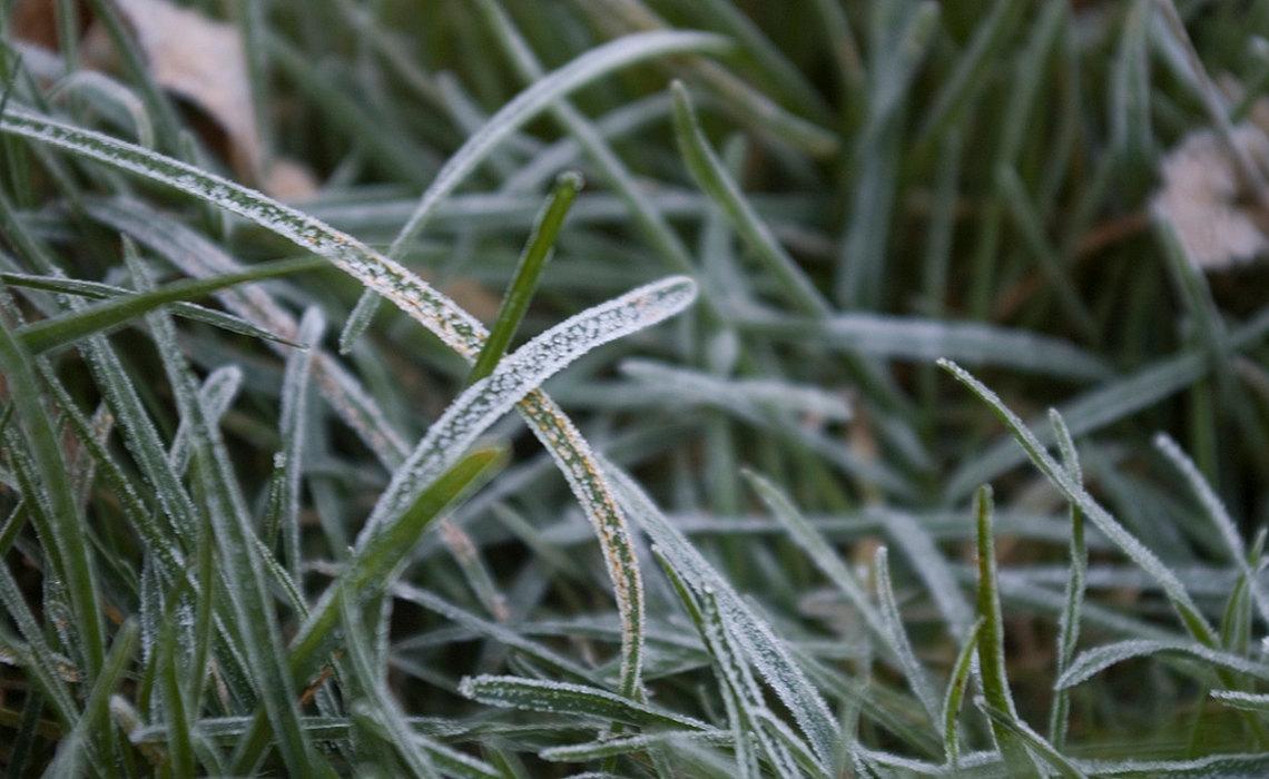 FrostyLawn [CCBY Ospreye]