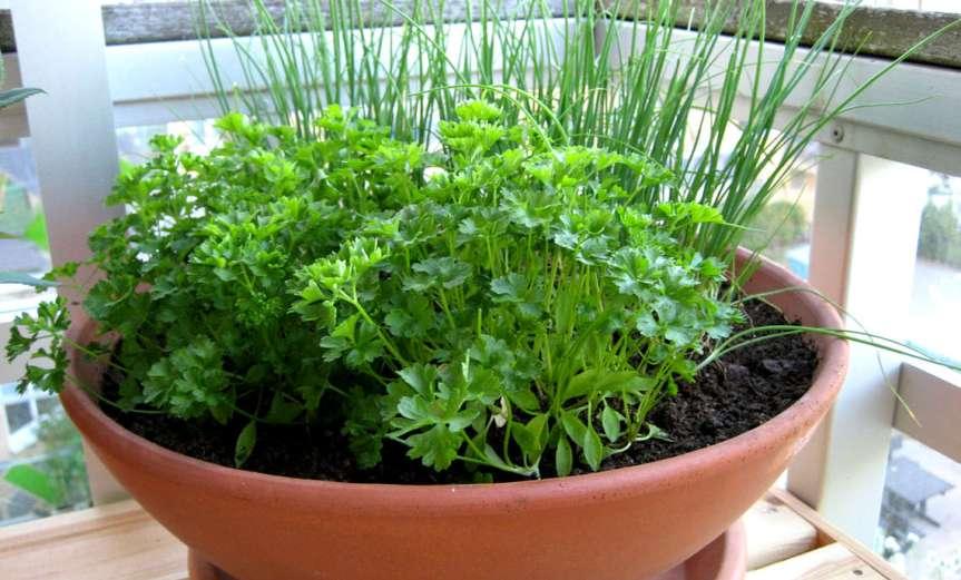 Herbs [CCBY-SA KalleSchärlund]