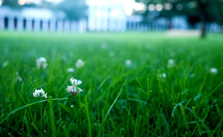 Lawn [CCBY-SA Rob]