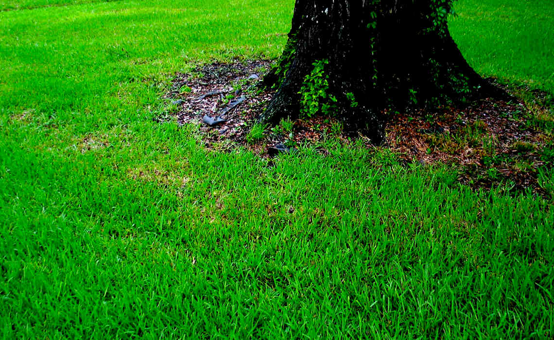 Lawn [CCBY ChristopherSessums]