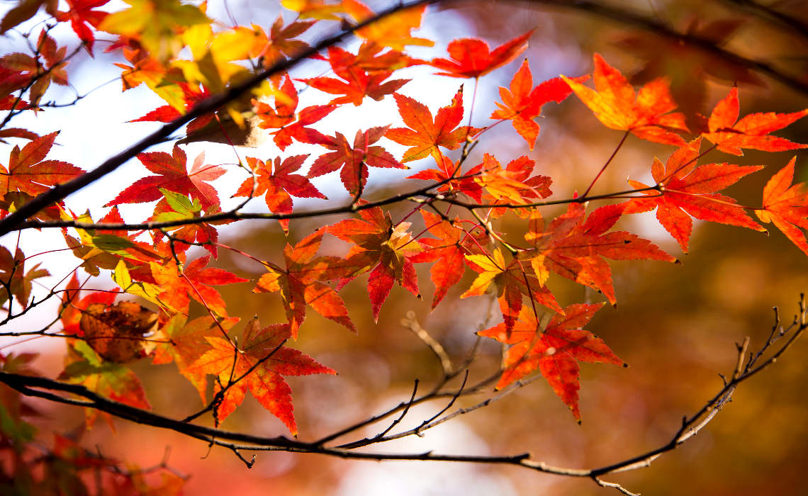 Leaves [CCBY-SA NorioNAKAYAMA]