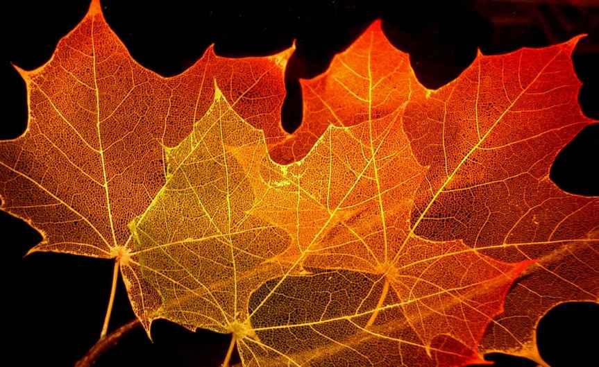 Leaves [CCBY SteveJurvetson]
