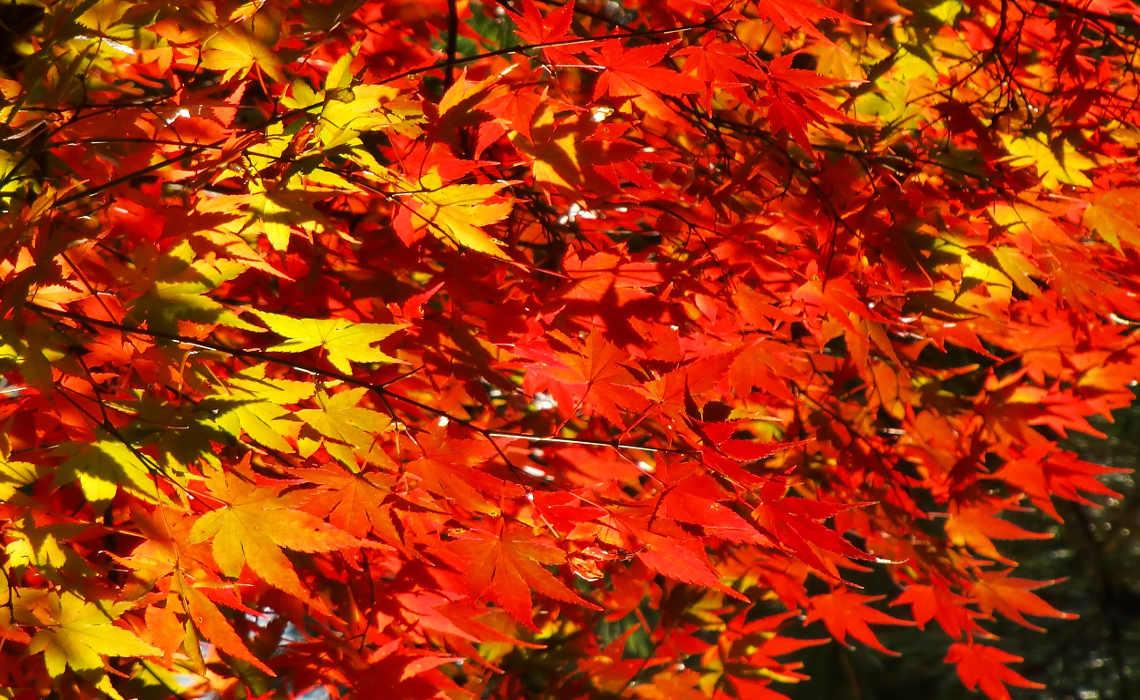 Leaves [CCBY TakaUmemura]