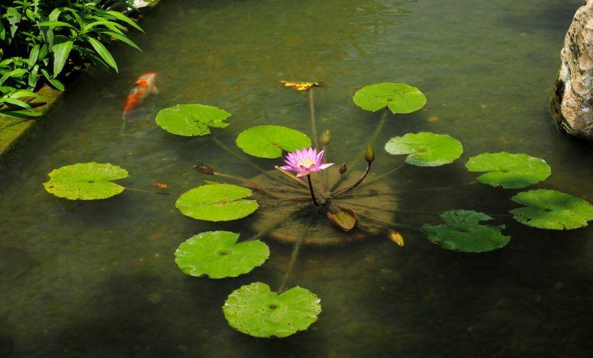 Pond [CCBY SA pangyuliu]