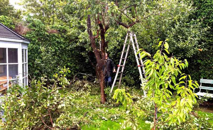 Pruning [CCBY HarryLawford]