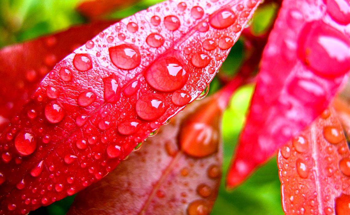 RainDrops [CCBY sayedahmad508]