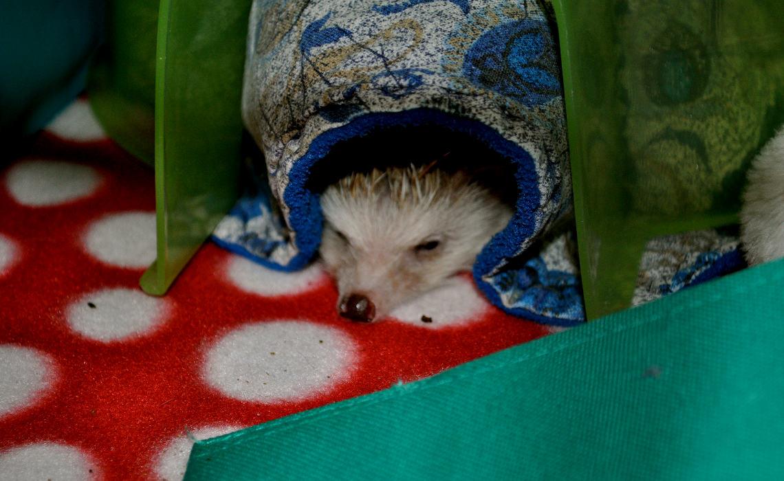 Sleepy [CCBY RoxiePrince]