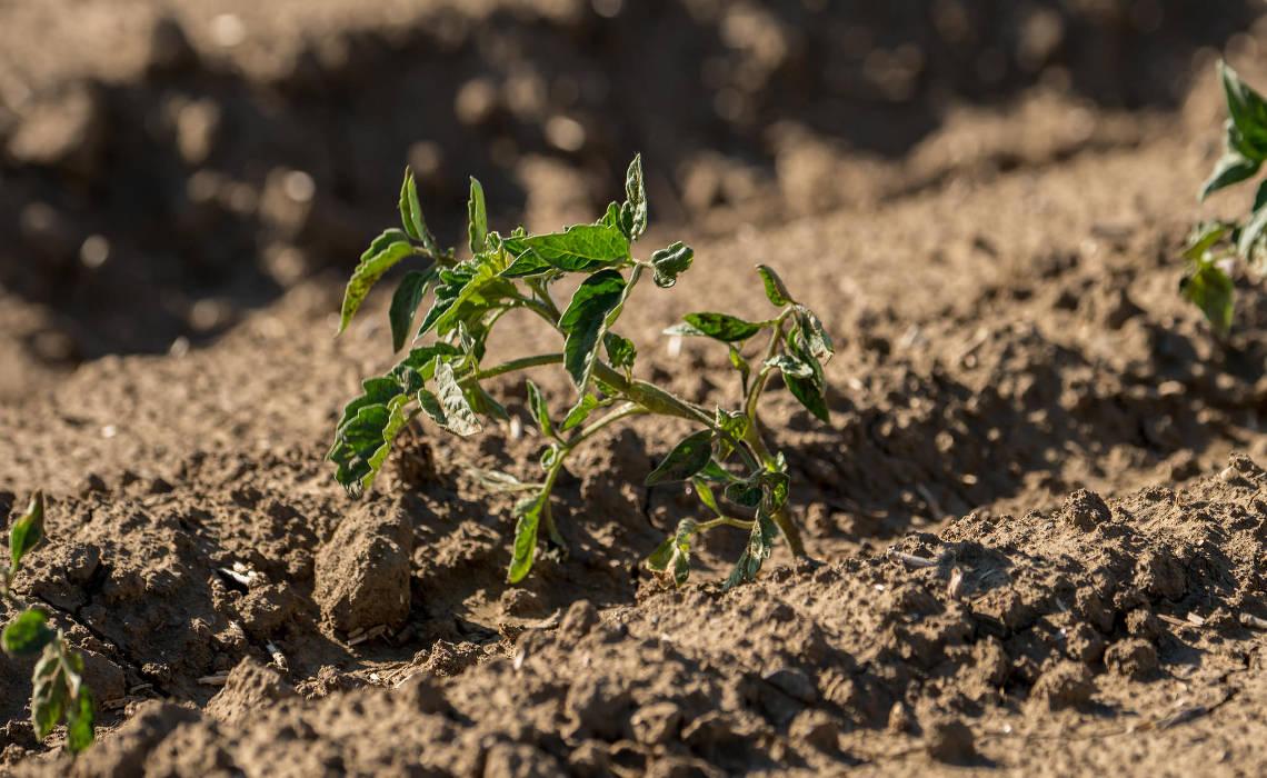 Soil [CCBY USDepartmentofAgriculture]