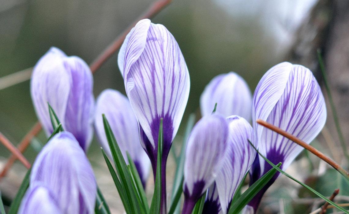 SpringFlower [CCBY JamesLee]