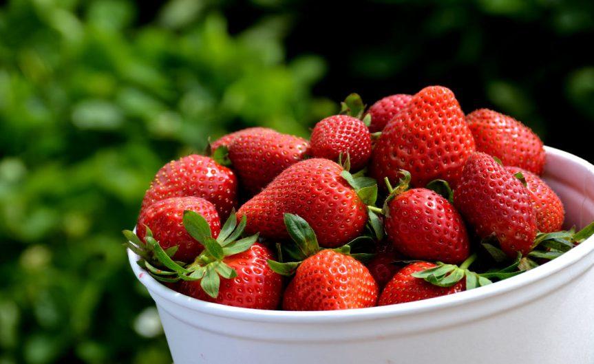 Strawberries [CCBY RobBertholf]