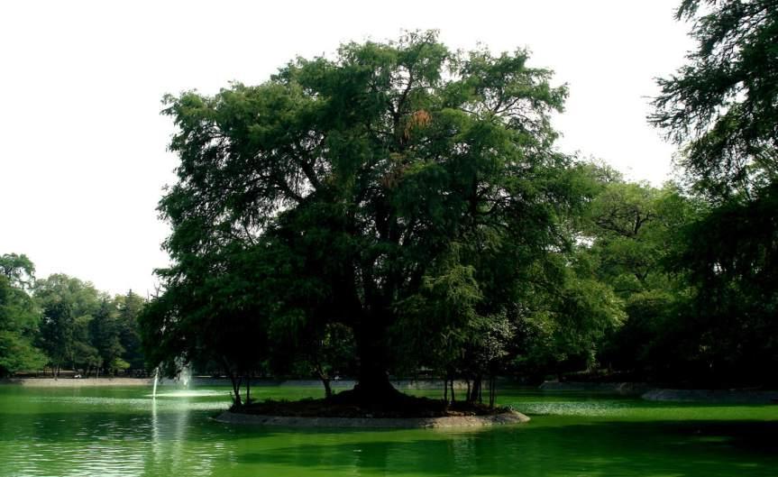 Tree [CCBY RodrigoPaoletti]