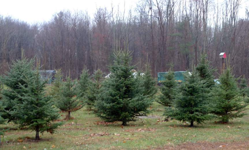 Trees [CCBY LoriL.Stalteri]