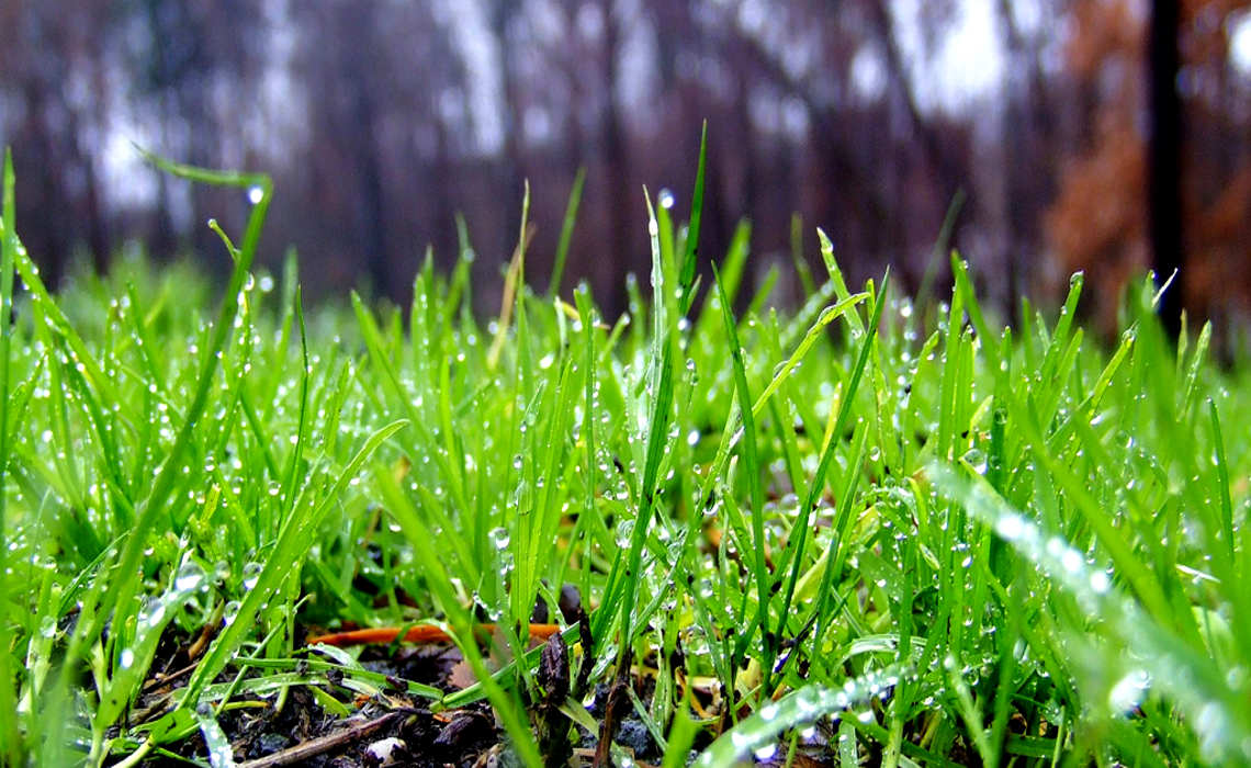 WetLawn [CCBY-SA JoshuaDavis]