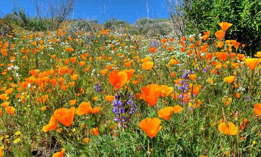 Wildflowers [CCBY tdlucas5000]