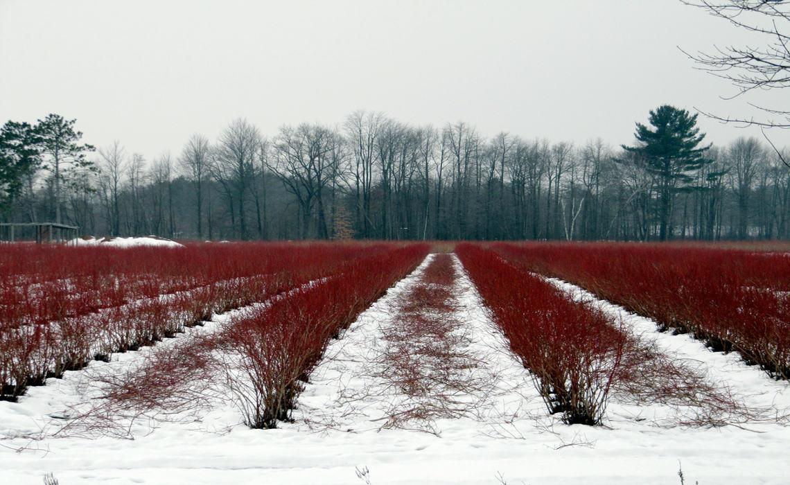 WinterColour [CCBY RachelKramer]