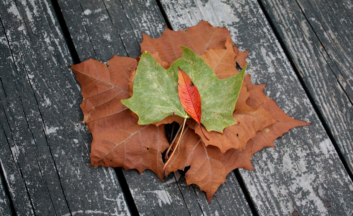 Leaves [CCBY RichBowen]