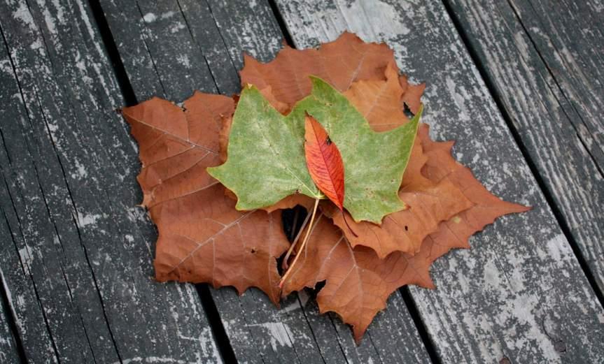 Leaves [CCBY RichBowen]