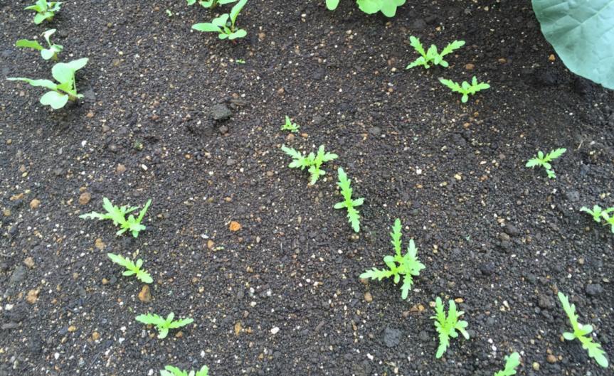Improved Soil [CCBY Masashi Yanagiya]