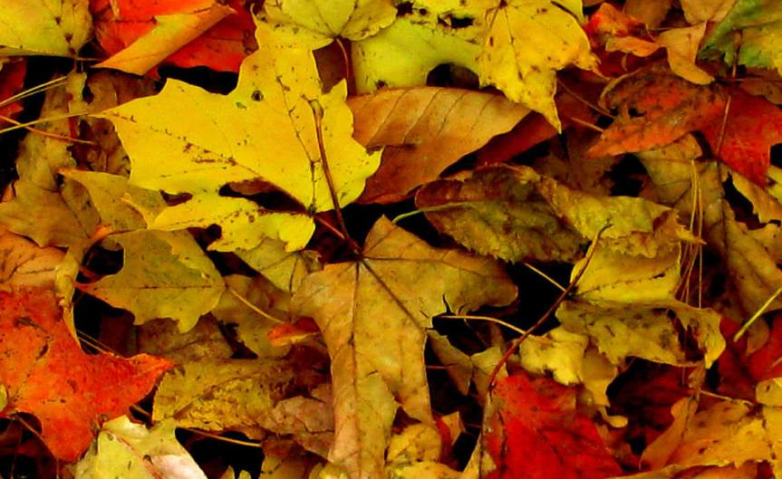 LeafHeap [CCBY Kevin]