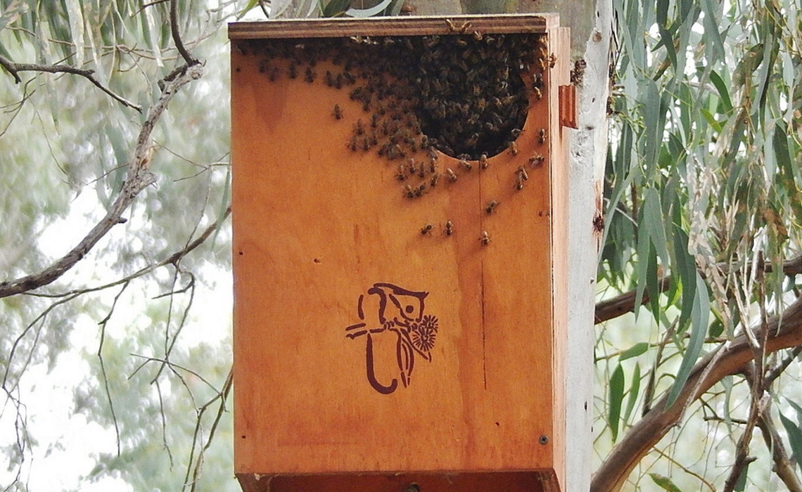 Bees [CCBY-SA Michael Coghlan]